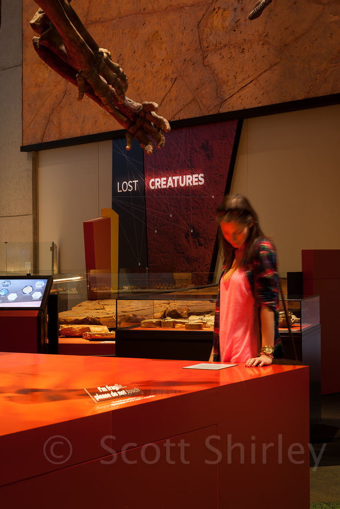 9591_lost_creatures_queensland_museum_brisbane
